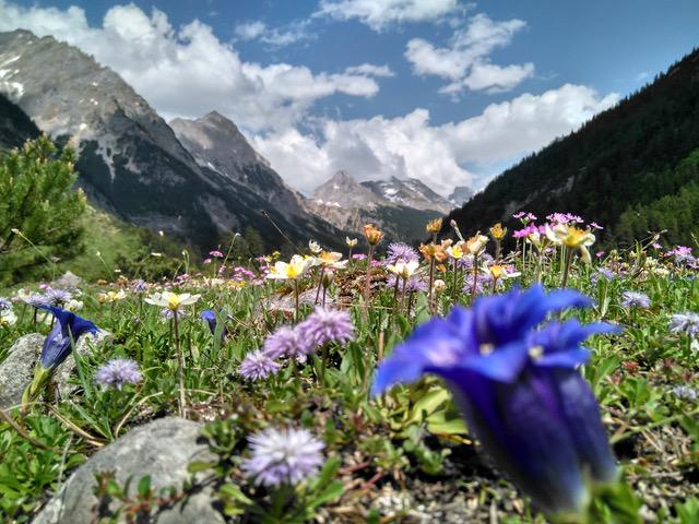 Blumen im Karwendeltal